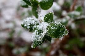 Hivernage des plantes : quelles solutions s'offrent à vous?