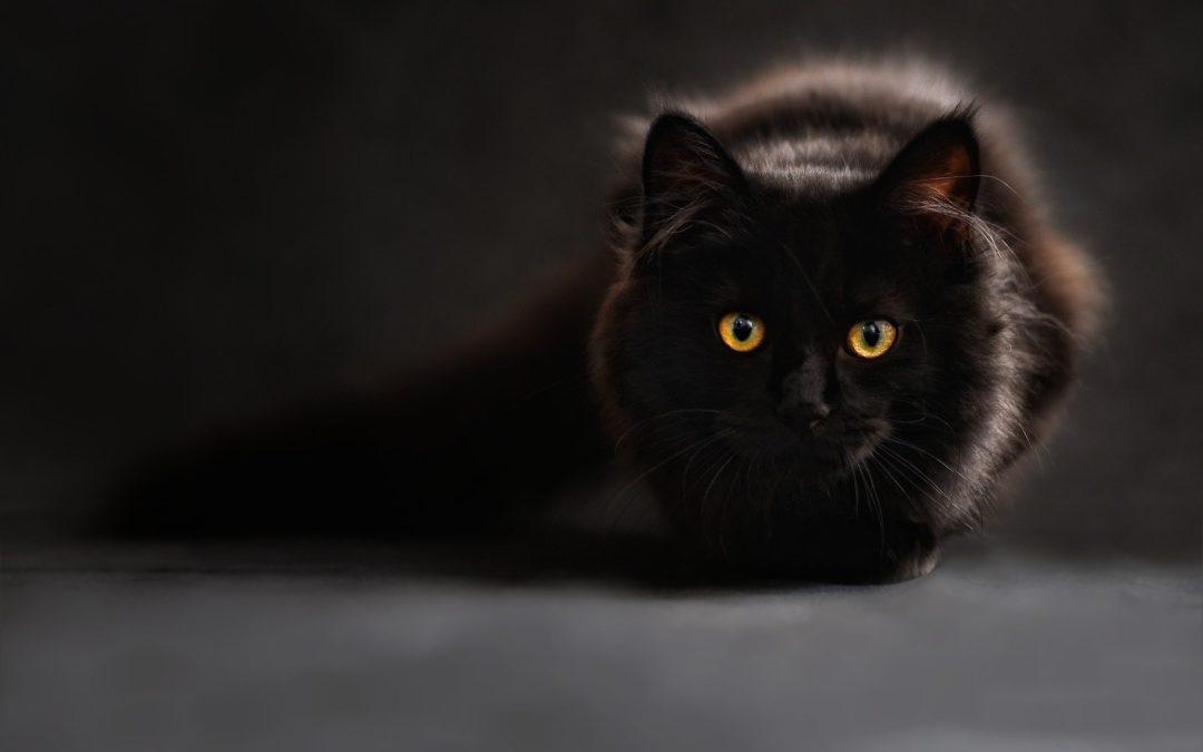 Des aliments dangereux pour le chat et certains animaux domestiques